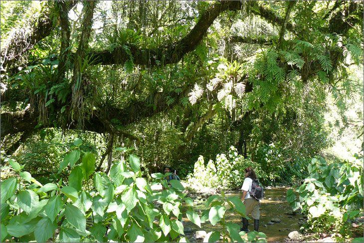 i77_33_salta_mundoenbicicleta_parque_nacional_el_rey_laurel_del_cerro